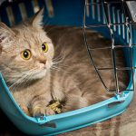 Keeping your cat safe as the nights grow lighter
