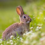 Keep your rabbit safe from poisonous plants this summer