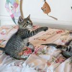 Vital tips for new kittens in Lostock Gralam