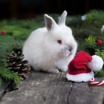 Advice from Northwich Vets on snug winter rabbits