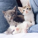 Checklist for new kitten owners