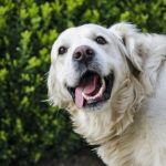 Helping your dog get more out of life