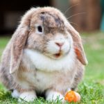 Is your pet vaccinated against RVHD?
