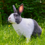 Keep your rabbit cool this summer