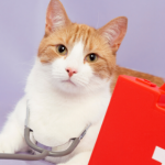 Five things to remember in a cat first aid emergency.