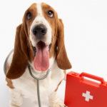 First aid for dogs – recognising seven common conditions.