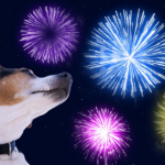 Prepare your pet in time for fireworks night with advice from our head vet Patrick Murphy.