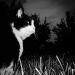 Northwich Vets has some dark night safety advice for cat owners.
