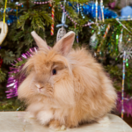 Bunny proofing the homes of Lostock Gralam for Christmas