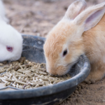 Northwich Vets' rabbit meal planner is perfect for the new year