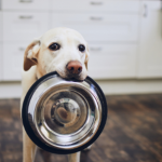 Patrick Murphy has this advice on how to feed your dog