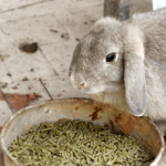 Patrick Murphy warns about 21 foods not to feed your rabbit