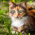 Katy has some spring advice for spotting cat fleas