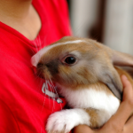 Understand the mental health benefits of living with a pet rabbit