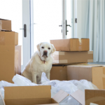 Northwich Vets' tips for moving house with your dog