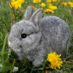 Summer gardening – poisonous plants for rabbits