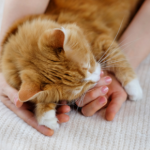 Why choose Northwich Vets for your cat's care