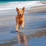 Six end of summer tips for dogs who need a boost