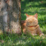 Patrick Murphy recommends ways to cool cats down in summer