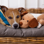Northwich Vets' tips on reducing separation anxiety in dogs