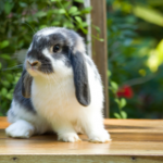 The most important behaviour Lostock Gralam rabbit owners must recognise