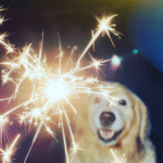 Northwich Vets' explain how to desensitise your dog to fireworks