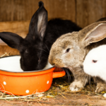 Let's make Lostock Gralam a happier place for rabbits and other small pets this 'fireworks season'